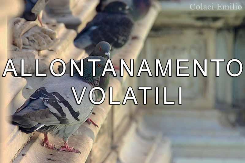 Allontanamento-Volatili-Colaci-Emilio